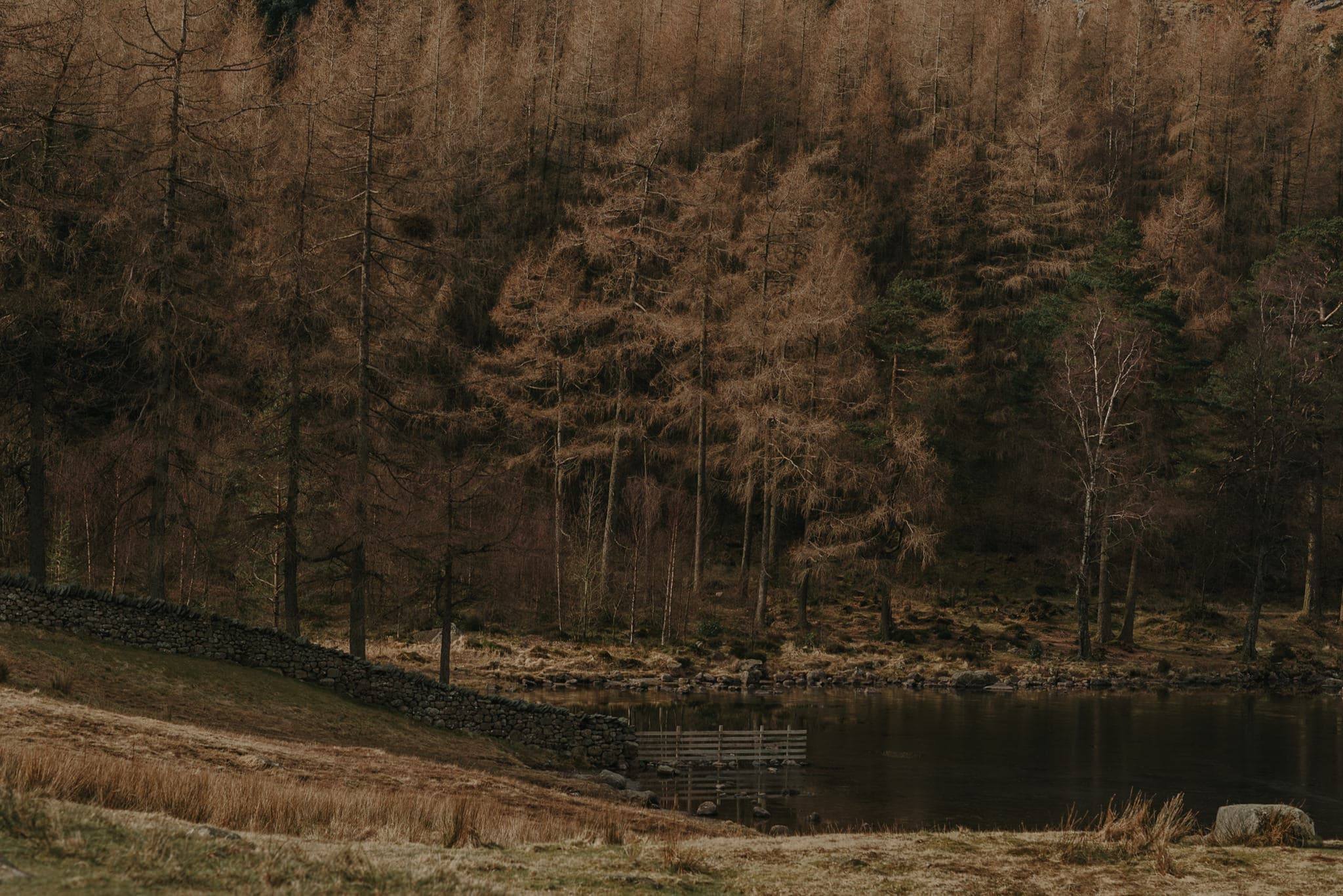 Blea Tarn Lake District Wedding Photographer 5